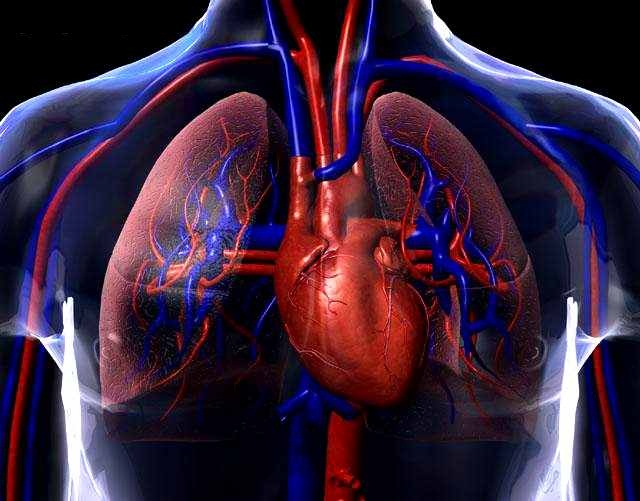 El Sistema Circulatorio